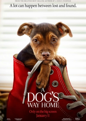 Cartaz oficial do filme A Dog's Way Home